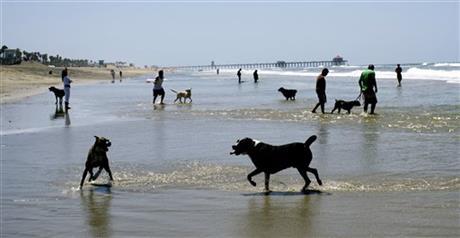 long beach dog park