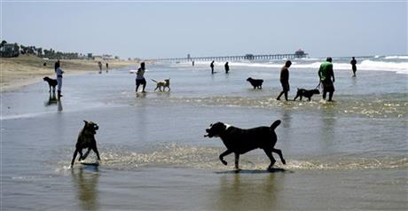 Looking To Enjoy Some Family Fun With Your Furball Long Beach Has Plenty Of Places Play Dog Parks And Beaches Include